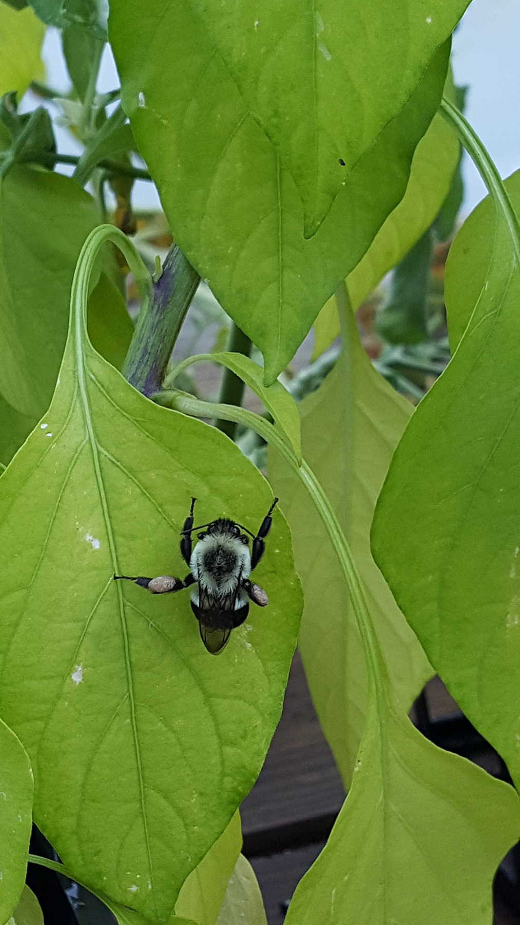A bee on a leaf.