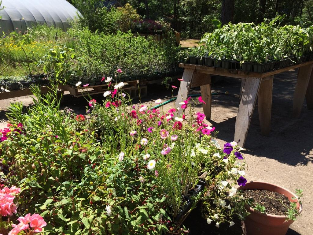 Assorted flowers and plants at MV Greenhouse