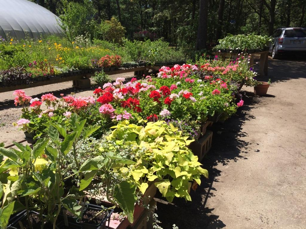 Outdoor plants at MV Greenhouse