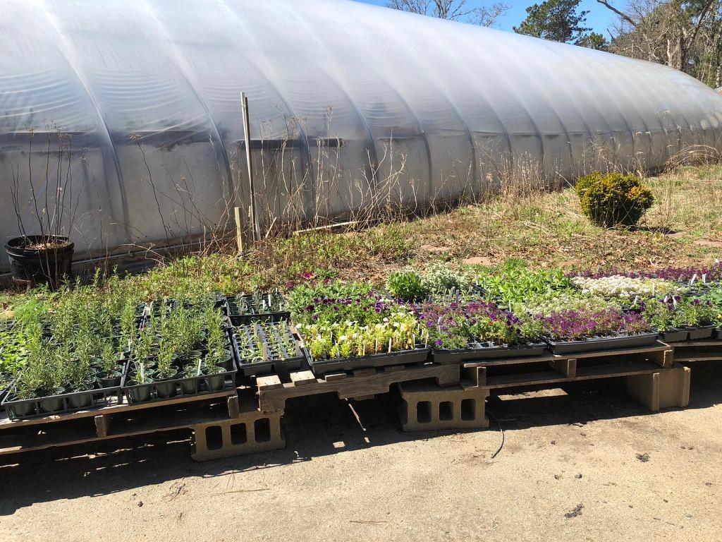 Plants at MV Greenhouse on display.