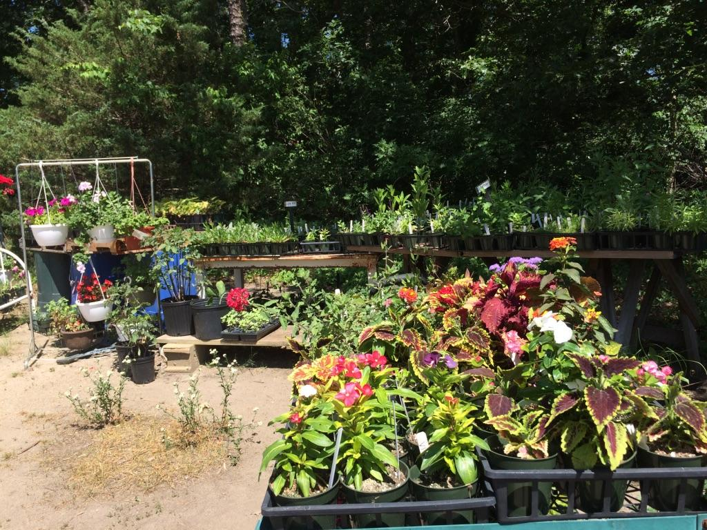 Plants at MV Greenhouse.