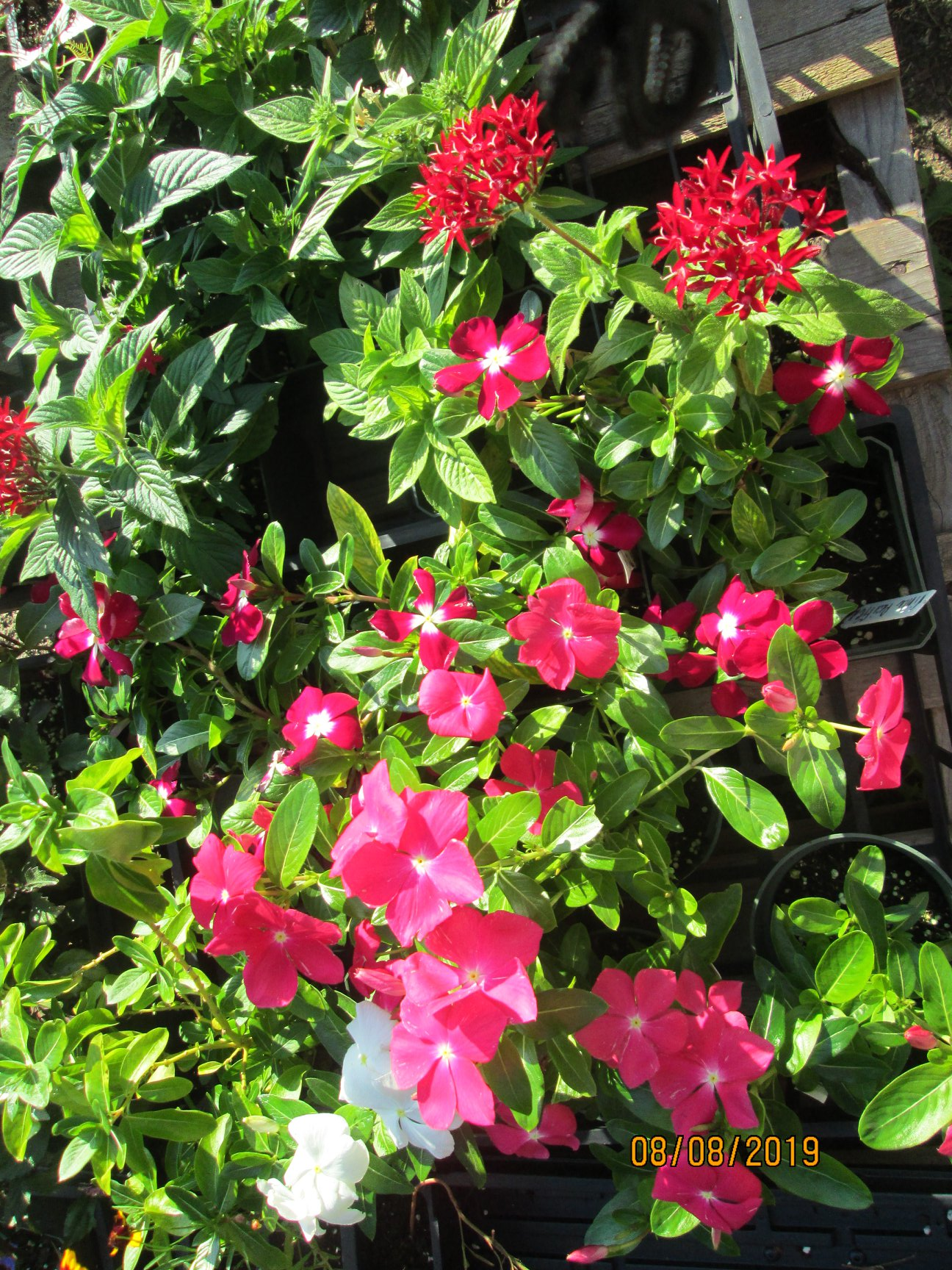 Red flowers at MV Greenhouse